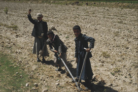Children in Yemen ploughing a field
